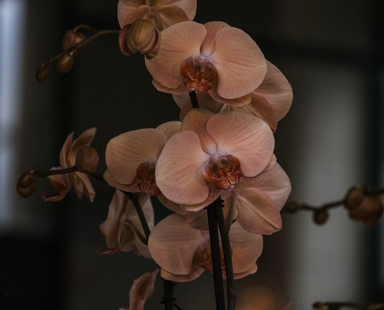 artphotography, photography, orchid - urbanart | ello