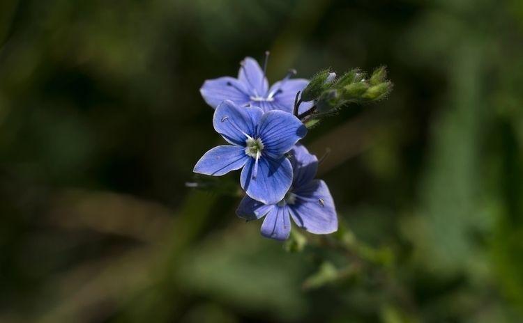 Eh! la belle bleue... https://e - gclavet | ello