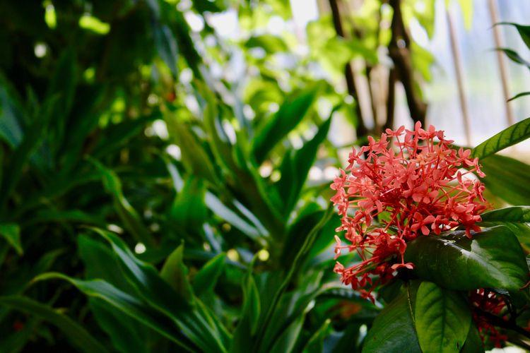 Flower, KewGardens - cameron1286 | ello