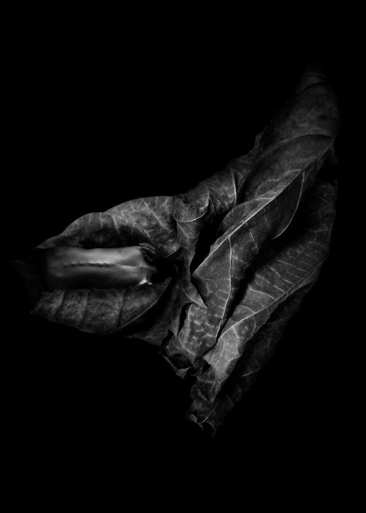 """Leaf Veins"" — Photographer/Mod - darkbeautymag   ello"