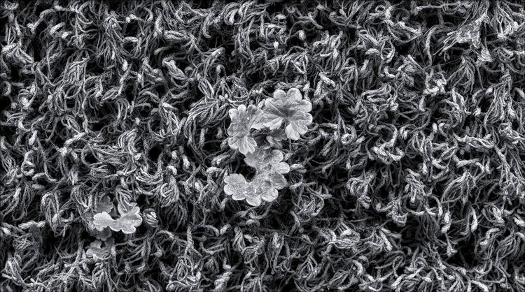 yarn; moss  - monochome, naturephotography - docdenny | ello