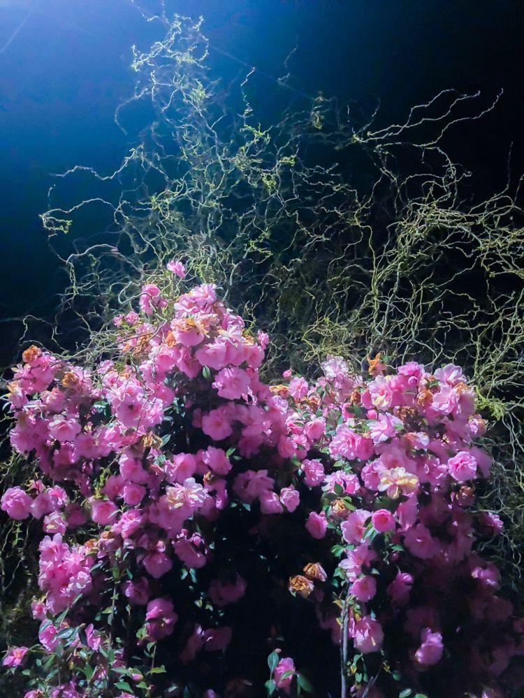Nightflowers - Photography - ellophotography - fenrizwolfe | ello