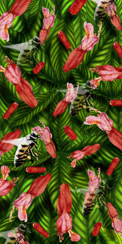 Bees Buckey, colored pencil+ di - mozartdedeaux | ello