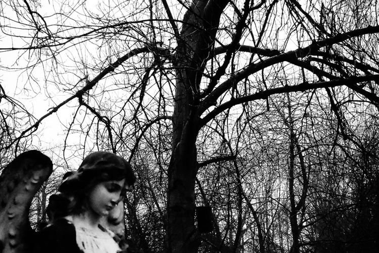 latest gallery..... Death Trees - hixposure | ello