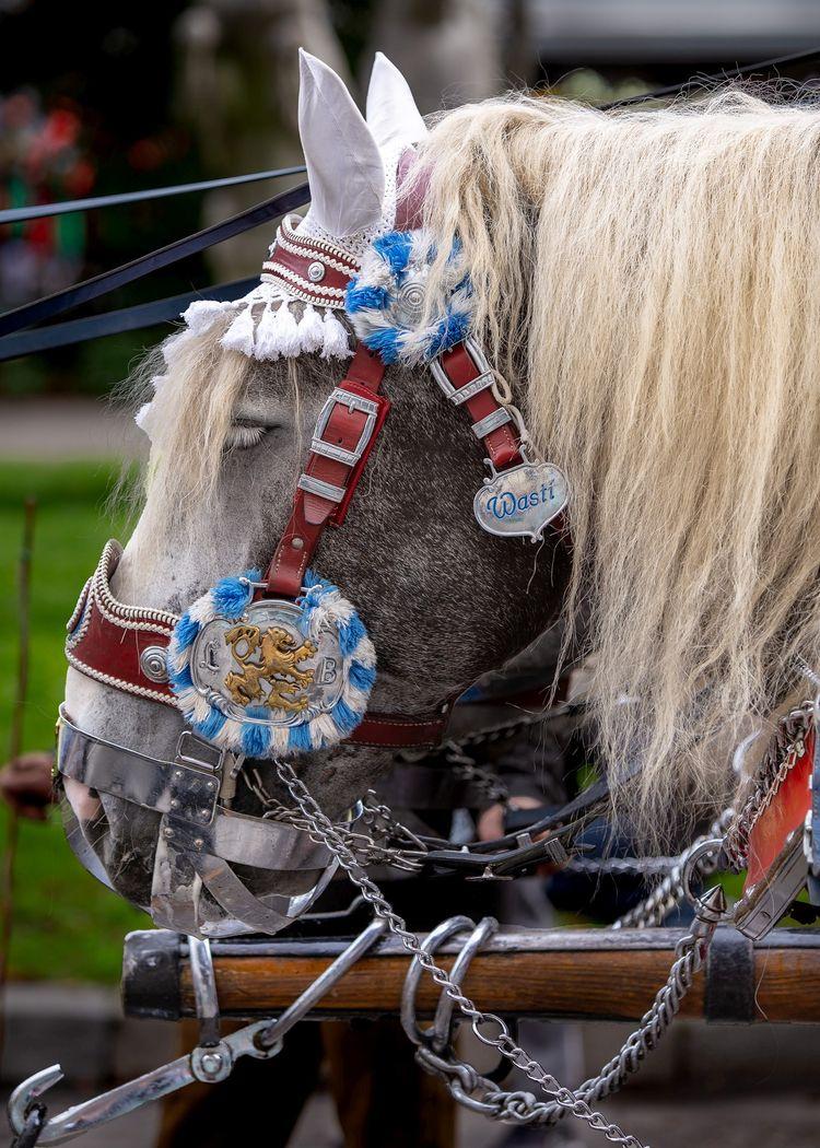 Dray-horse 'Wasti' ar Oktoberfe - andr345r | ello