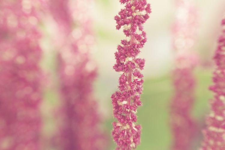 Helix - photography, plant, flower - marcushammerschmitt | ello
