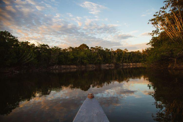 Columbian Amazon search Peacock - thinktomake   ello