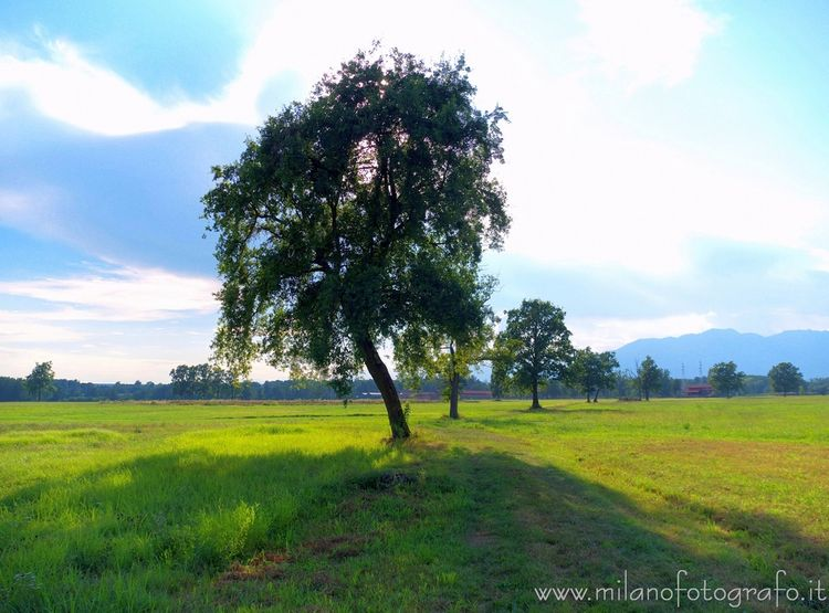 (#Biella, Isolated trees fields - milanofotografo | ello