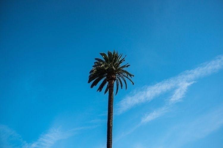 Palm Tree - lewdlife, lewdlifestyle - lewdlife   ello