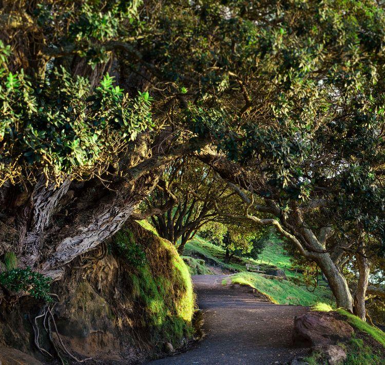Tree-lined Path - jesslowcher | ello