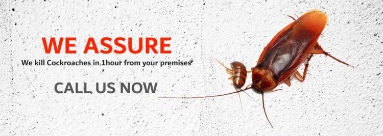 cockroach control services Duba - alarfapctc | ello