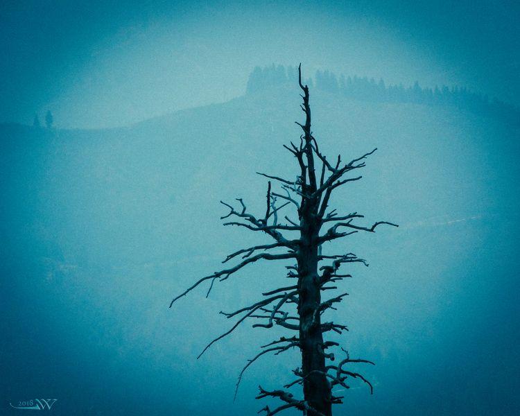 deep.snag - smoky, smoke, ellooutside - jwsubastra | ello