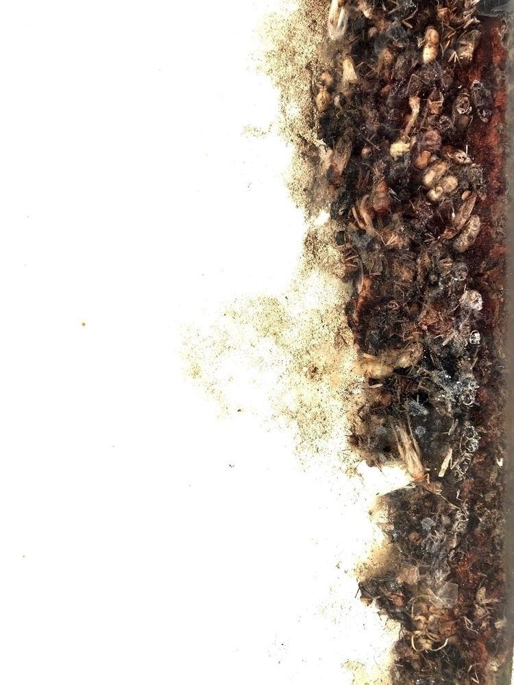 happenstance dead insects manag - scottdrickey | ello