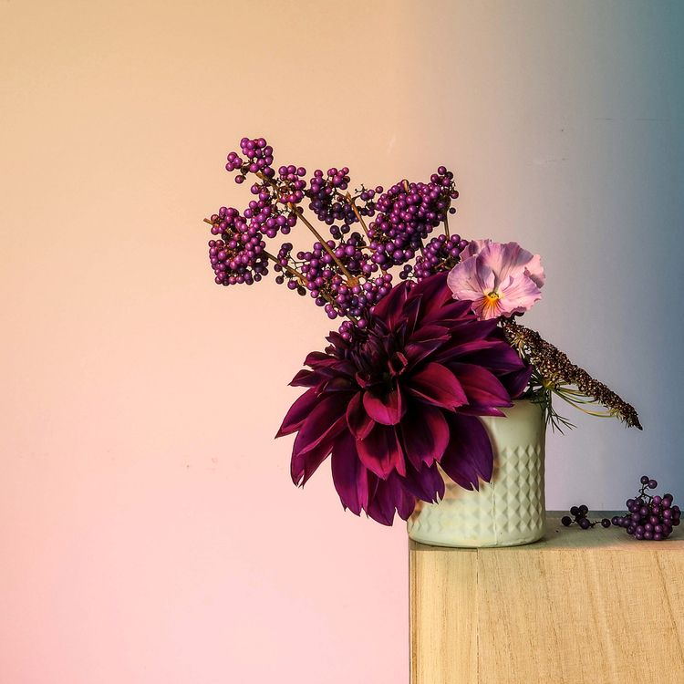 Purple Highness  - art, colour, photography - mrw_mrw | ello