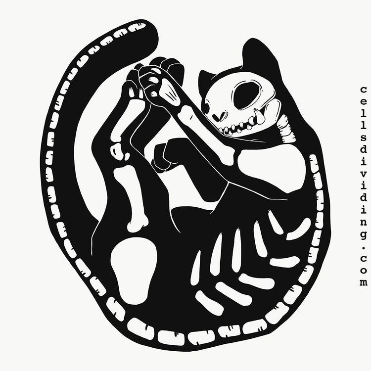 Skeleton cat doodle iPad Apple  - cellsdividing | ello