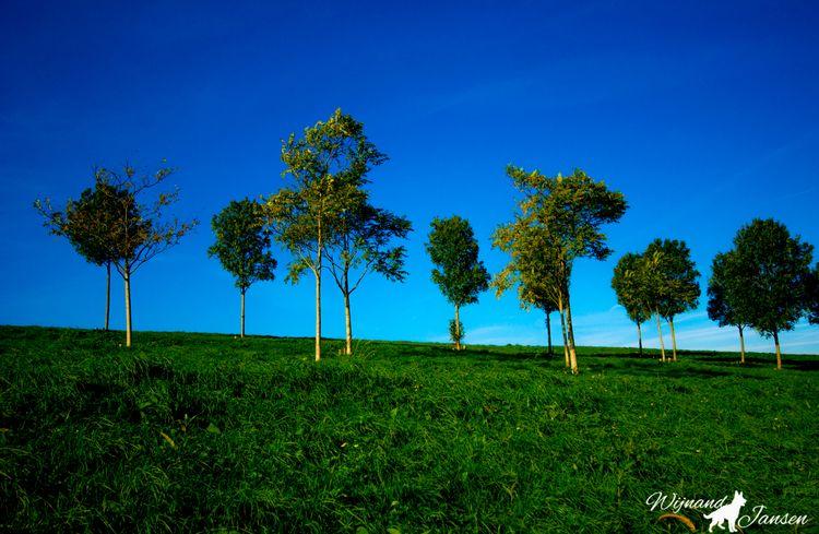 Beautiful trees hill - artmen | ello