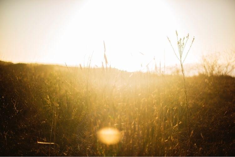 light, sun, sunset, sunflare - taylormcintyre | ello