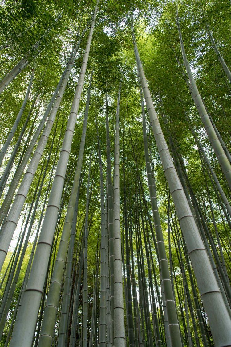 Bamboo beautiful. helpful envir - sarahleak | ello