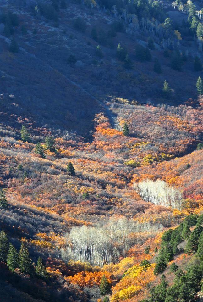 Colors Mountain. SW Colorado - tessjohnstone   ello