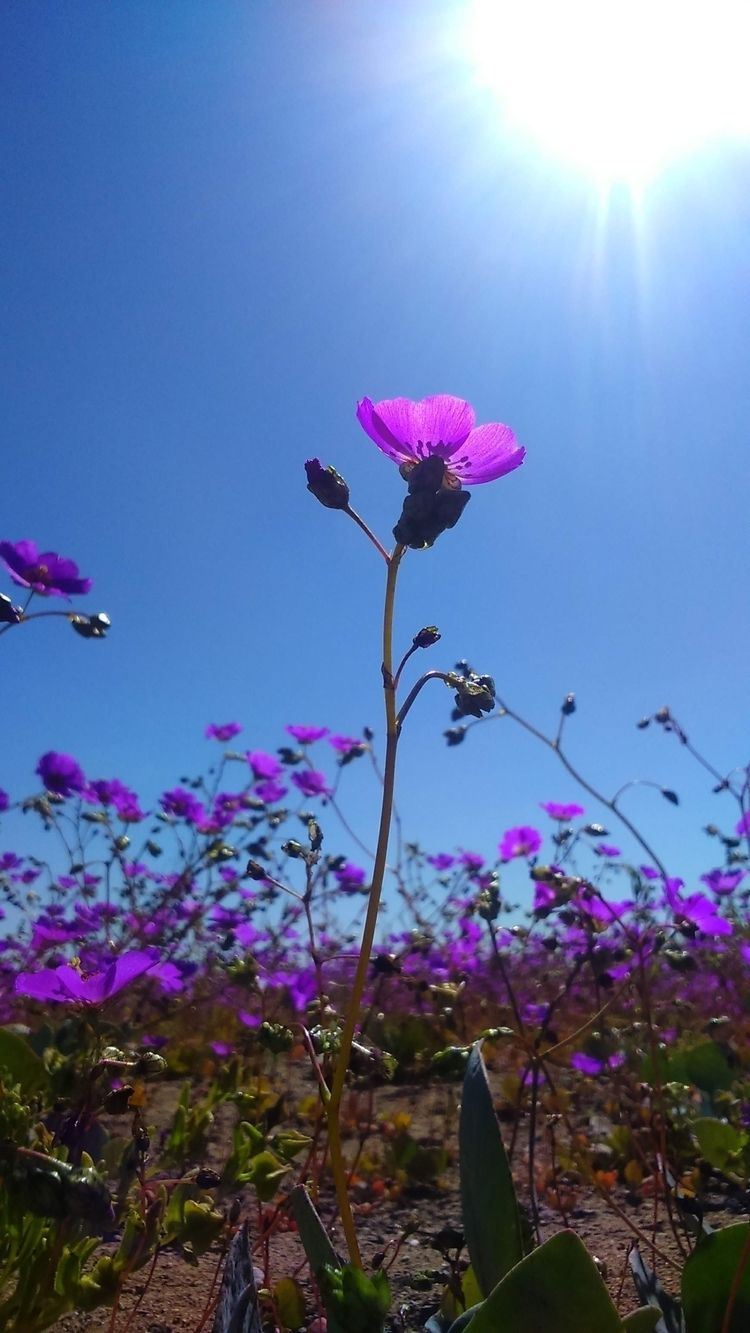 Flowering desert - mar_xela | ello