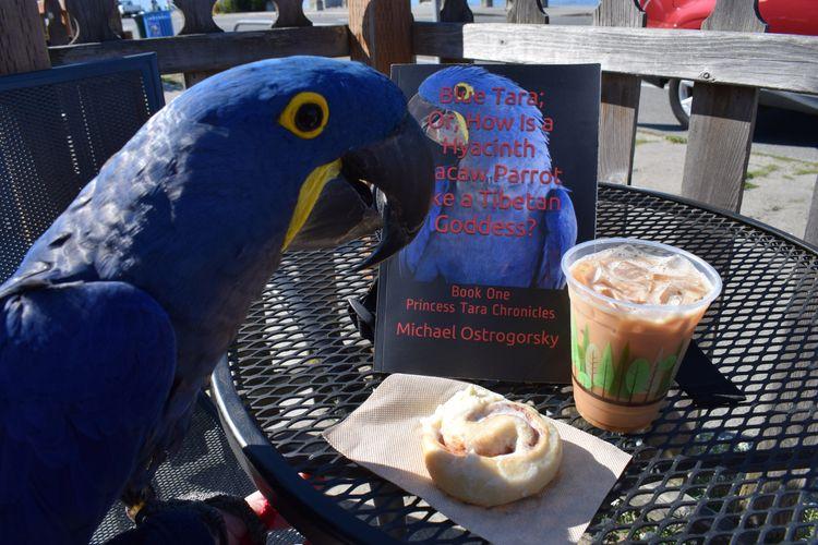 reading weekend? Hyacinth Macaw - michaelostrogorsky | ello