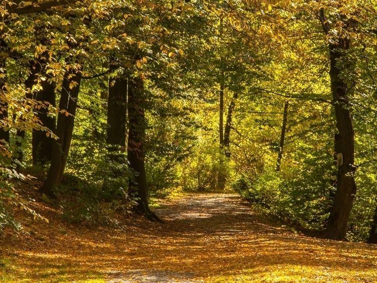 Autumn gold - Bielefeld, photography - marc_creighton | ello