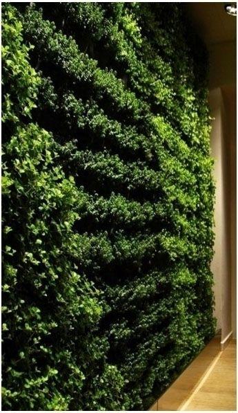Living Green Wall green walls w - airgrow | ello