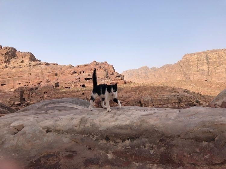 Desert cat - eoin01 | ello
