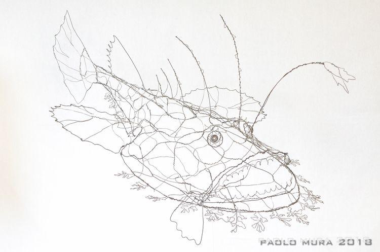 Lophius piscatorius (cm. 130x70 - fildiferro | ello