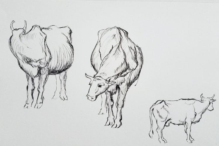 Study study cows picture sketch - ell0world | ello