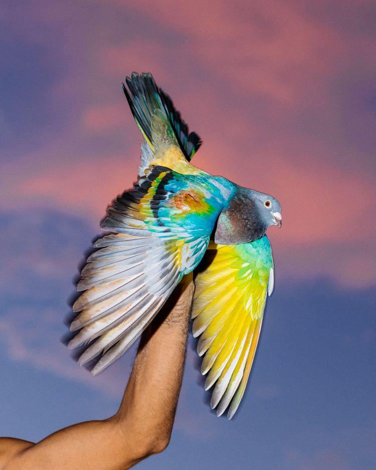 Cuba Pigeon Racing Carlos Jaram - thinkoutsidethebox | ello