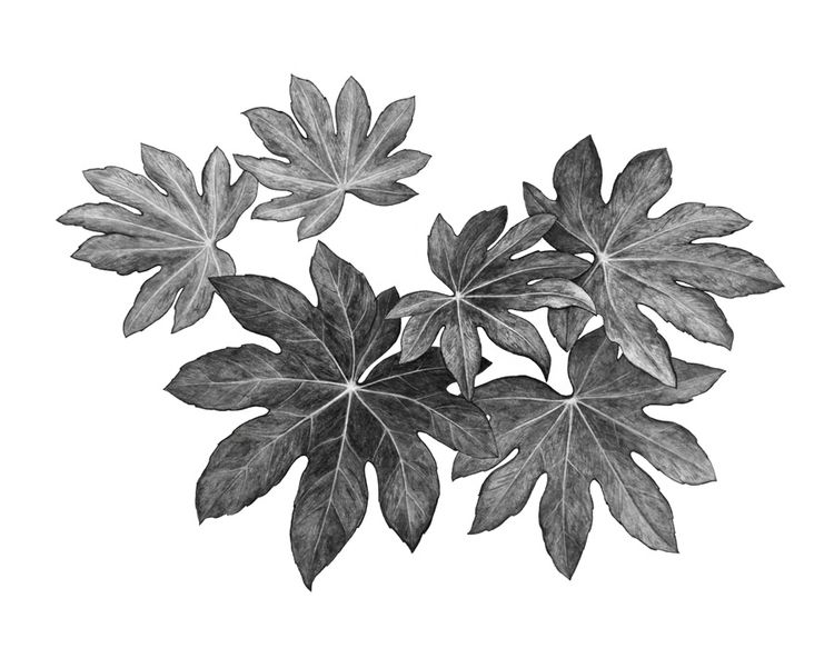 watercolor, drawing, leaves, blackandwhite - artist_ | ello