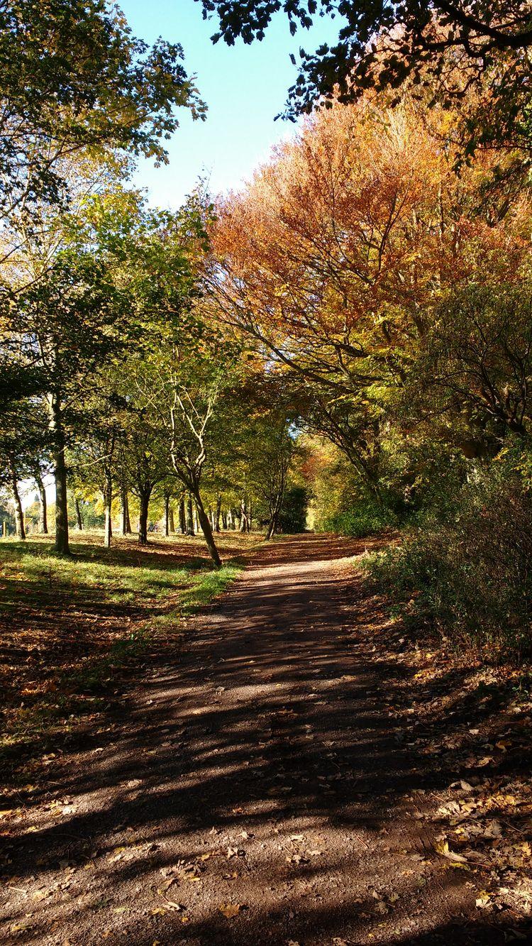 Camperdown Park, Dundee 2. Quee - firehorsetextiles   ello
