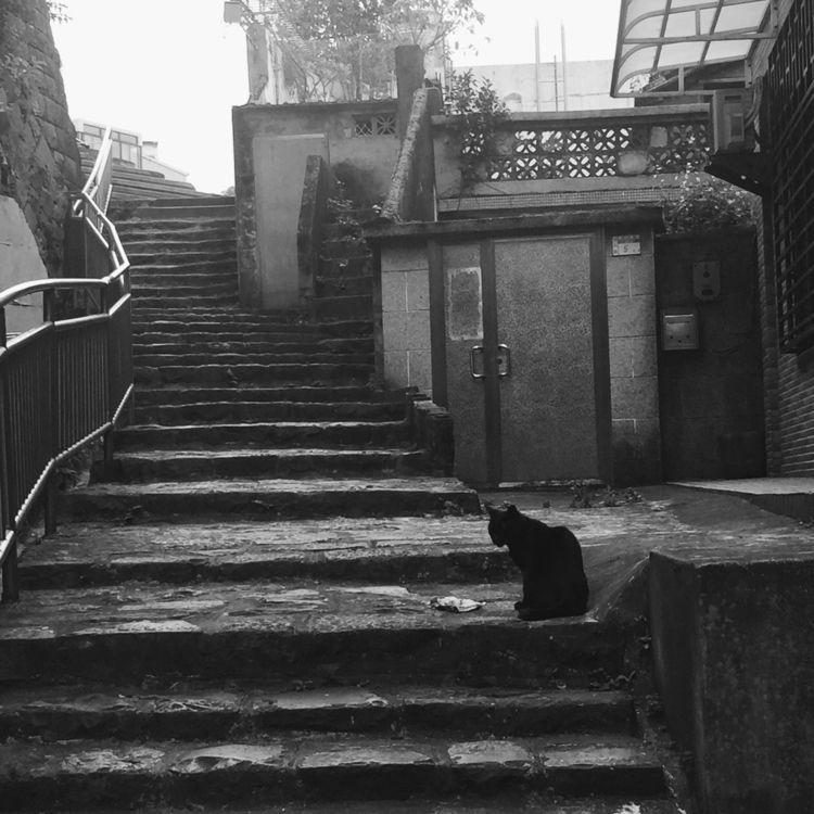 cat, blackcat, blackandwhite - kendou0508 | ello