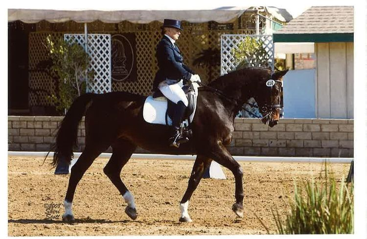age 17, Shelley Browning signed - shelleybrowningdressage | ello