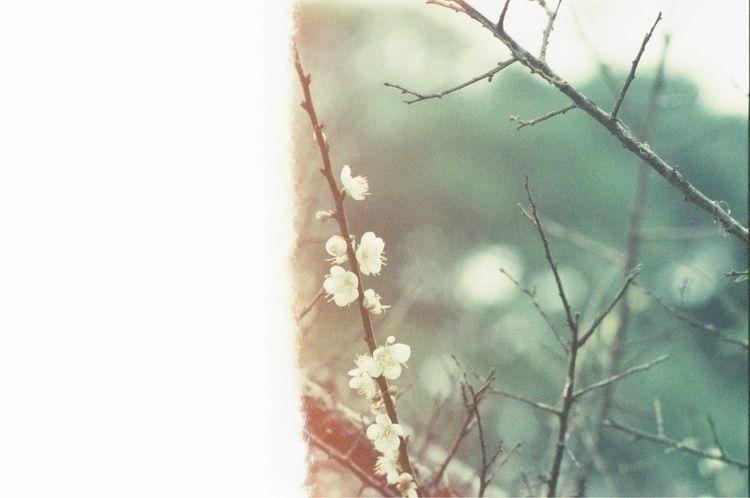 日常 f3 - nikon, film, 正片 - liaos | ello
