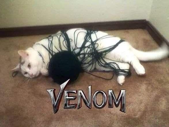 Caturday, Venom - robogiggles | ello