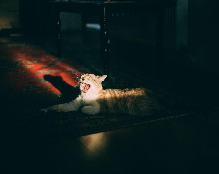 Sleepy - cat, silhouette, dark, tone - oanceaalex | ello