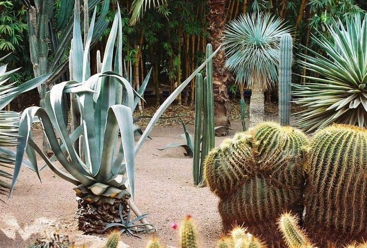 Kaktus Marrakesh, Morocco, Dec  - ljubitza | ello