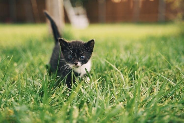 Exploring - nationalcatday, kitten - benraigoza | ello