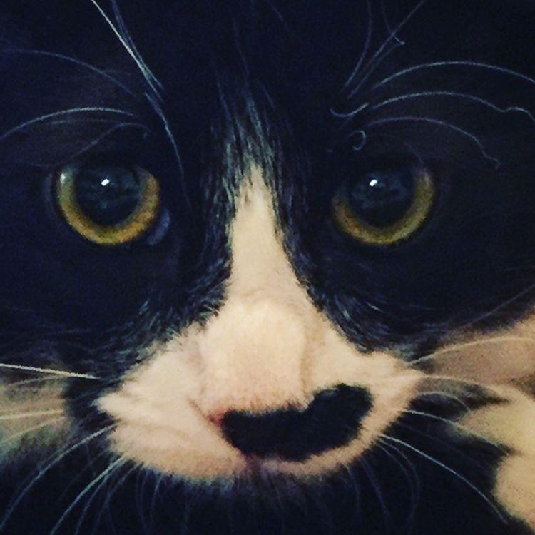 Loretta kitten - redbrush77 | ello