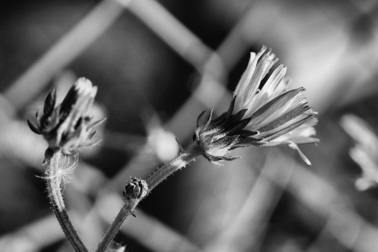 Herbstfeuer - photography, macro - marcushammerschmitt | ello