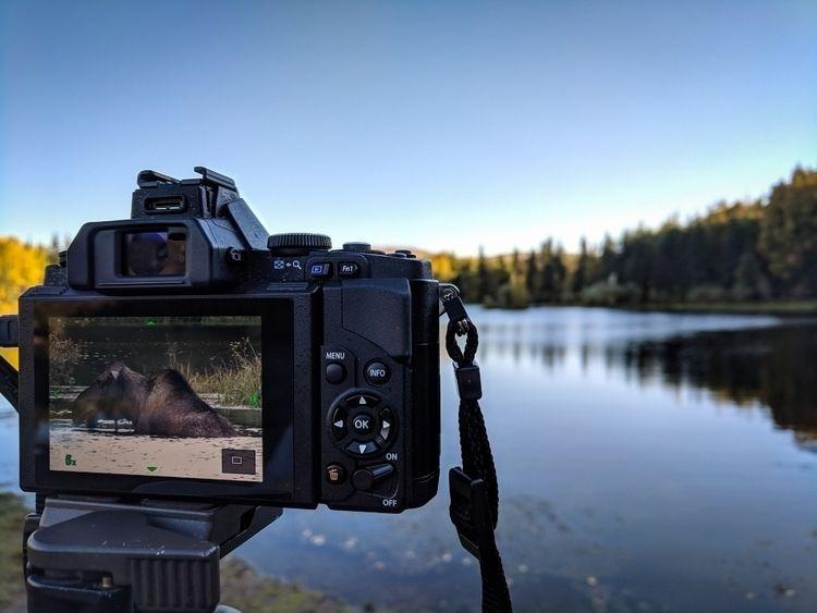 Captured moose, Chena resort, l - tacosteev | ello