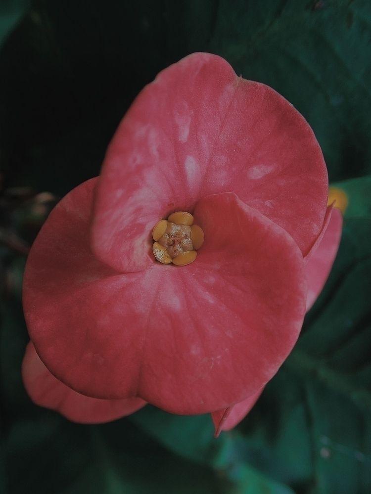 Flower Auroville - nature, surroundings - sharmajigetlost | ello