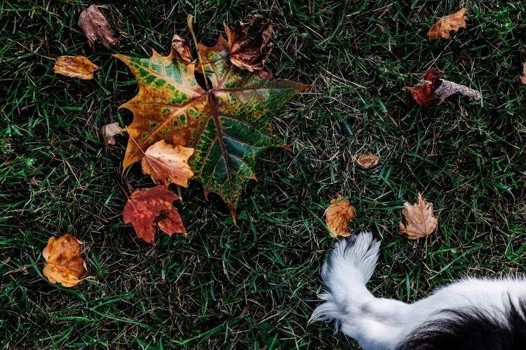 leafing, life, project, jonathan - leafinglife | ello