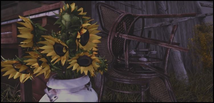 Borneo ~ - SecondLife, Sunflowers - vivography | ello
