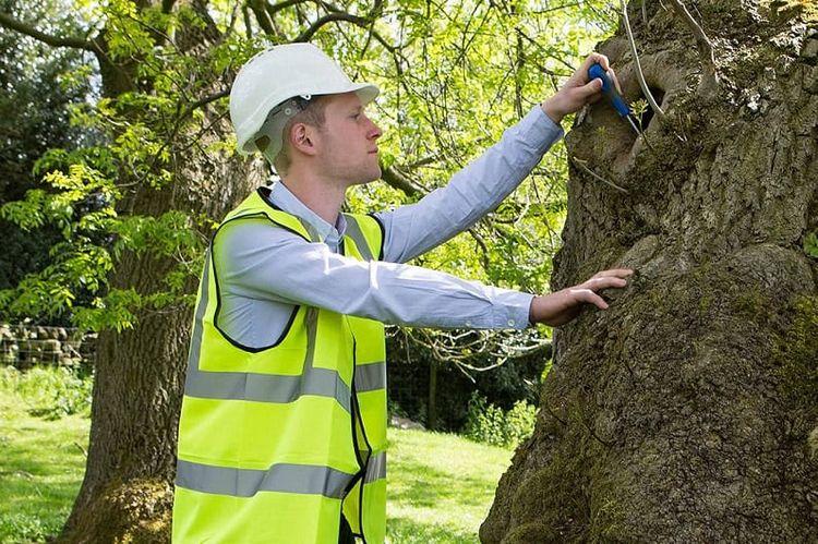 tree survey important carry pub - chriss974 | ello