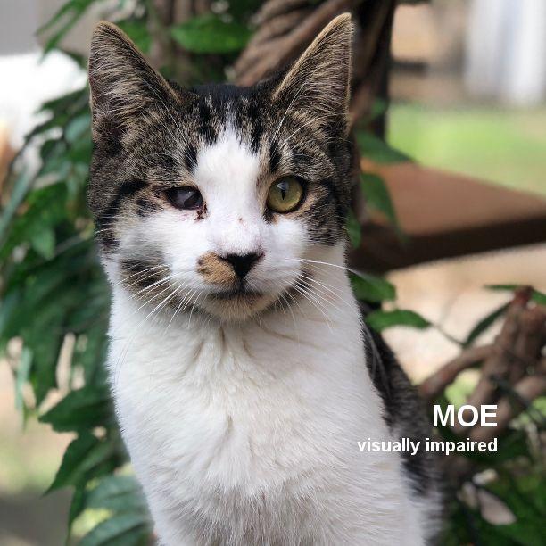 COMMENT SHARE Meet: Moe, Neuter - snapcats   ello