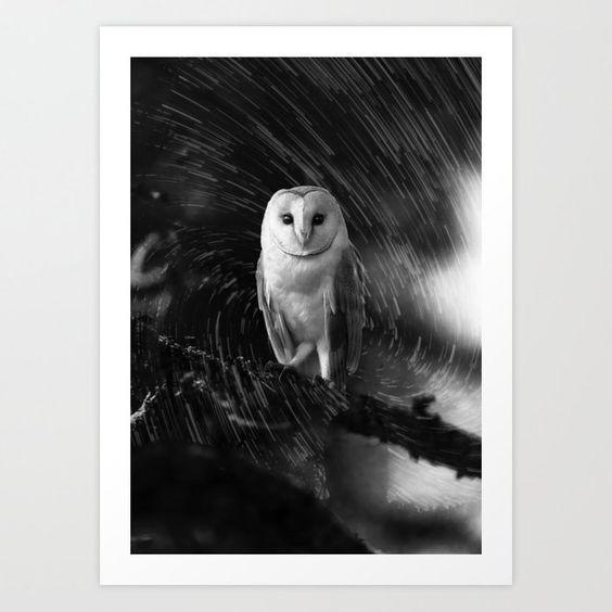 Society6! Night Bird d3bAU4 - Prints - d3bau4 | ello