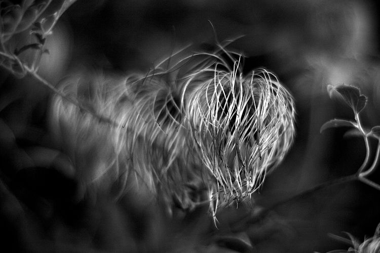 Botanical Monochrome 5590 - flowerphotography - dorian-stretton | ello